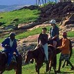 leso pony