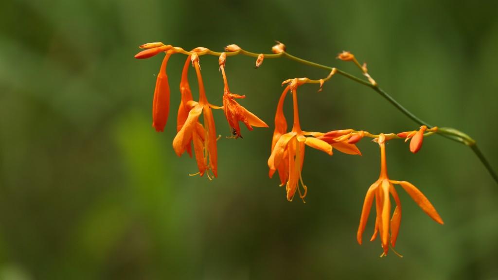Flower in the Tsitsikamma
